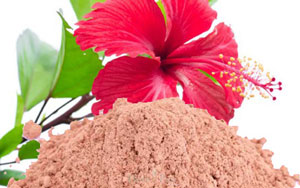 use-Hibiscus-to-make-homemade-curly-hair-conditioner